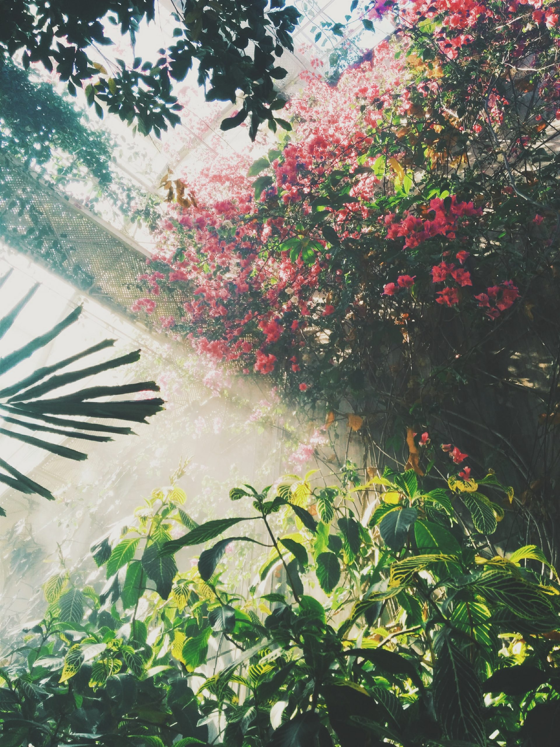 Tuinman DelFauw: A Gardeners Dream